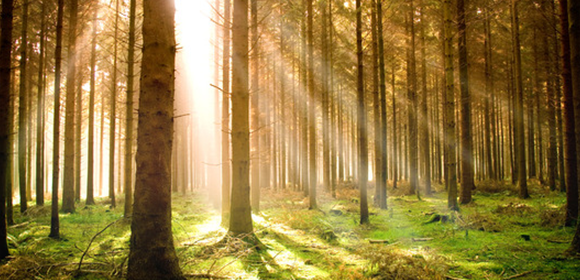 Sunrays in a Gloomy Forest